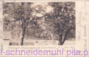 Eichenwald Motylewobrück bei Schneidemühl 10.6.1901 Piła Kalina